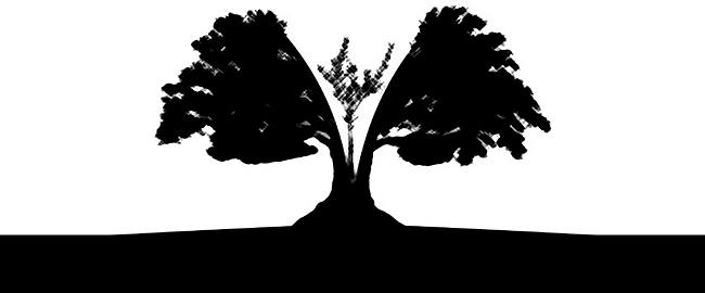 עץ זית נטיעה התחדשות שבר שני עמים מדינה אחת שתי מדינות