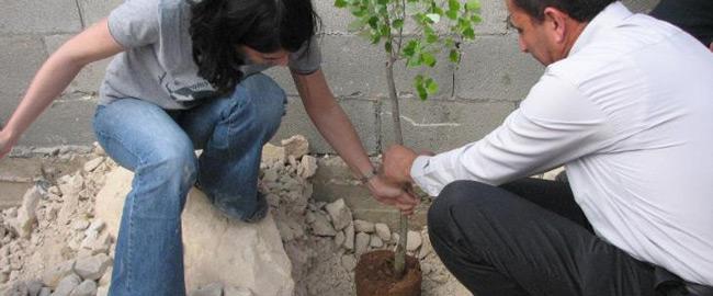 palestine-tree