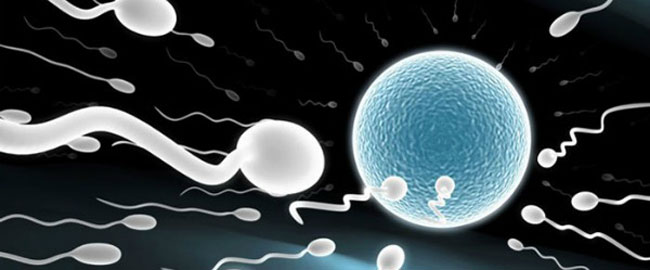 sperm_meeting_egg