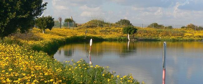 אביב בפארק האגם בראשון לציון spring פרחים טבע מים חרצית