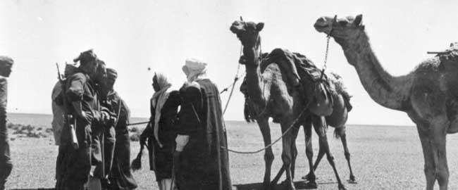 """בדואים מביר מילחן בדרך לשדה אברהם, בזמן מבצע עובדה (צילום: ארכיון הפלמ""""ח) צבא גירוש היסטוריה bedouim-palmach"""